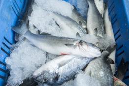 תמונה של דגים בקרח