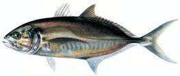 דג הטרחון
