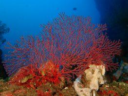 אופירן ים-סופי